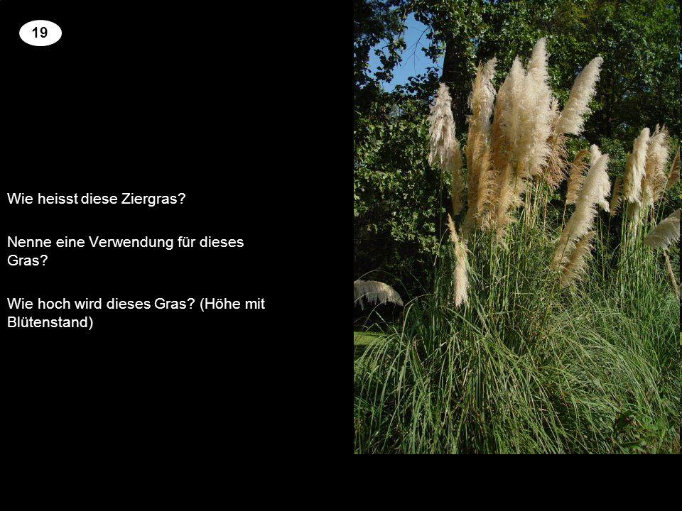 Wie heisst diese Ziergras Nenne eine Verwendung für dieses Gras
