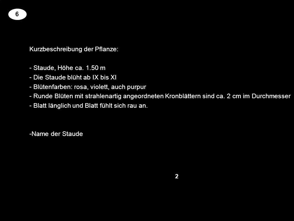Kurzbeschreibung der Pflanze: Staude, Höhe ca. 1.50 m