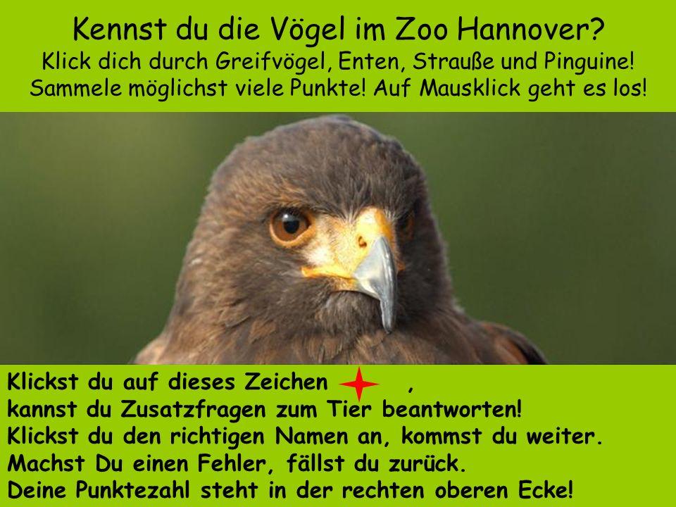 Kennst du die Vögel im Zoo Hannover