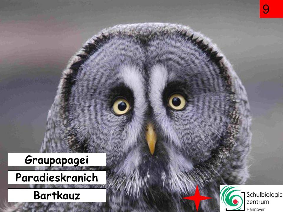 9 Graupapagei Paradieskranich Bartkauz