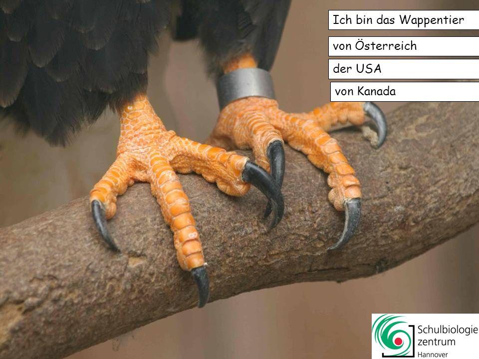 Ich bin das Wappentier von Österreich der USA von Kanada