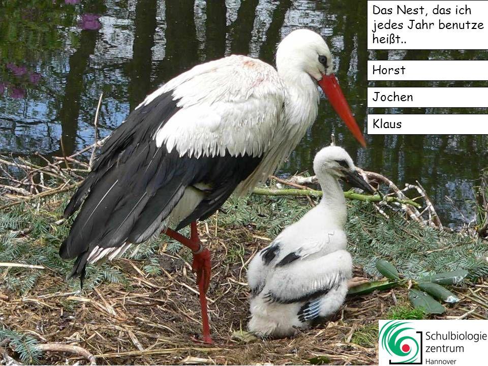 Das Nest, das ich jedes Jahr benutze heißt..