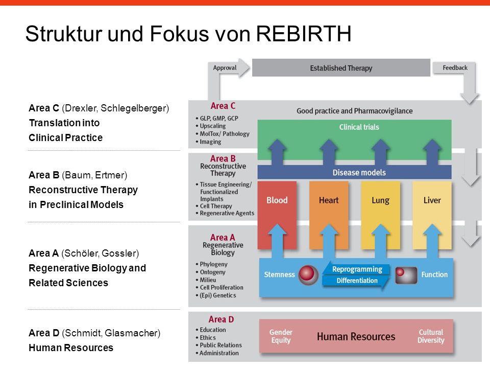 Struktur und Fokus von REBIRTH