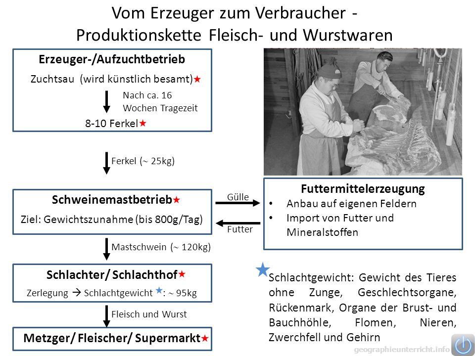 Vom Erzeuger zum Verbraucher - Produktionskette Fleisch- und Wurstwaren