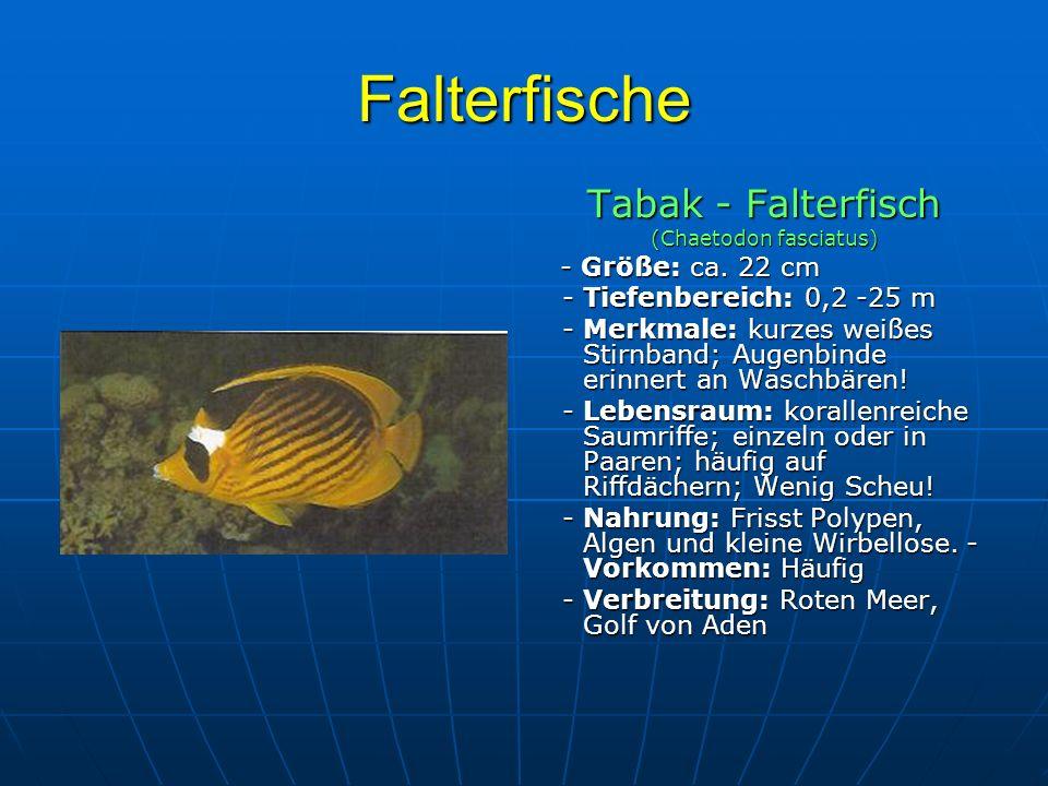 (Chaetodon fasciatus)