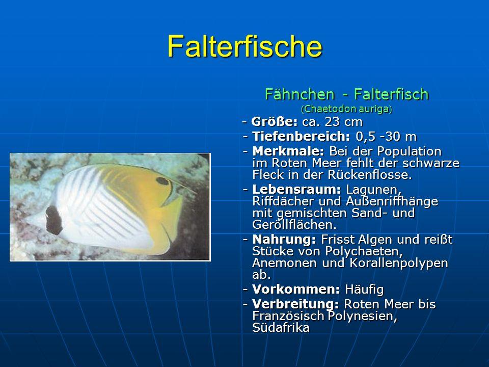 Fähnchen - Falterfisch