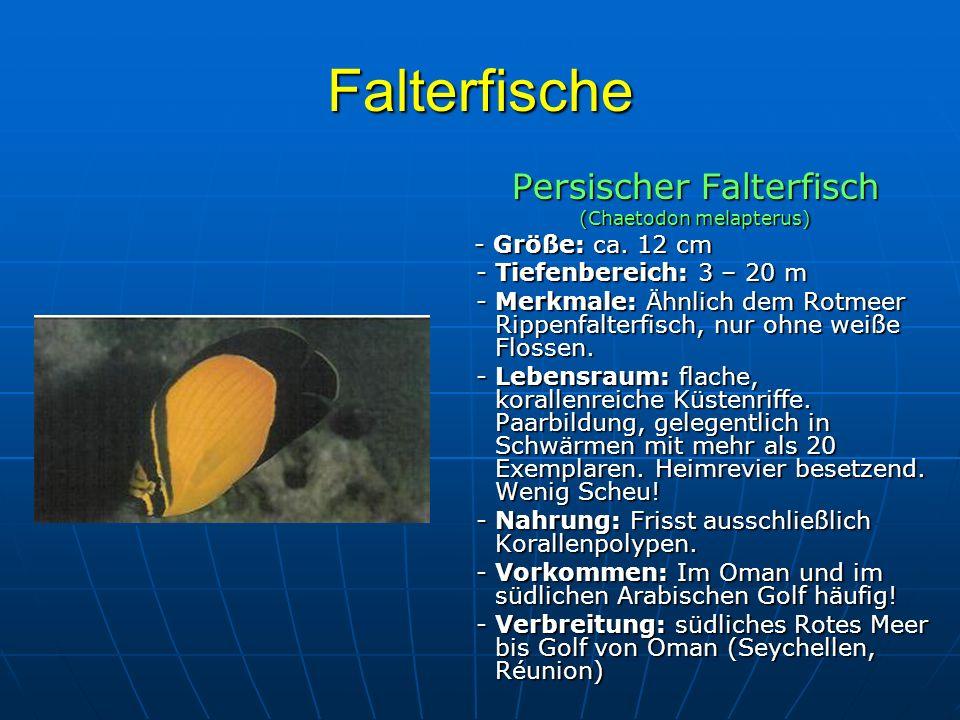 Falterfische Persischer Falterfisch - Tiefenbereich: 3 – 20 m