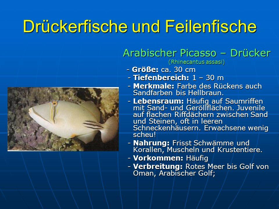 Drückerfische und Feilenfische