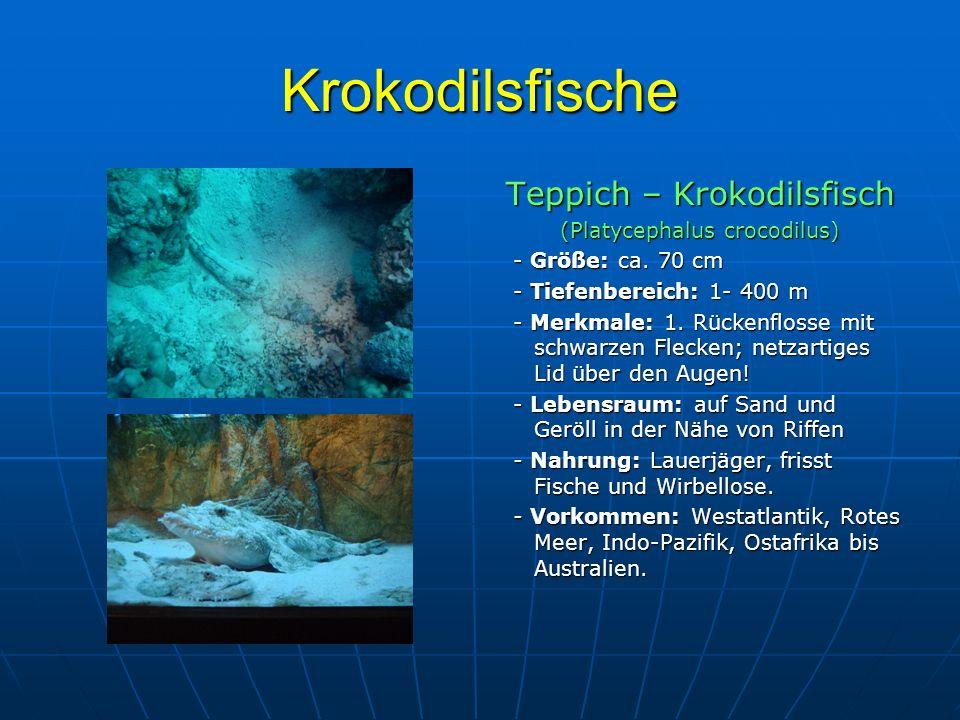 Krokodilsfische Teppich – Krokodilsfisch (Platycephalus crocodilus)