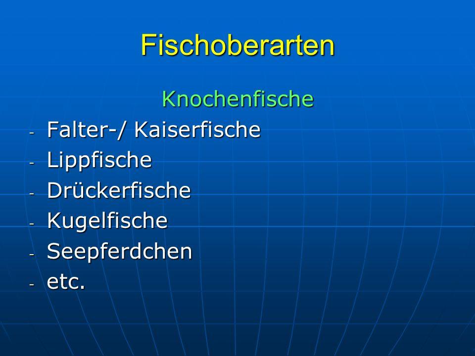 Fischoberarten Knochenfische Falter-/ Kaiserfische Lippfische