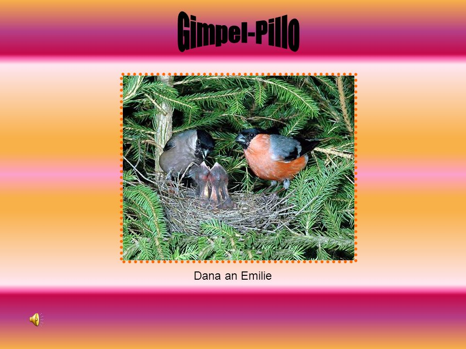 Gimpel-Pillo Dana an Emilie