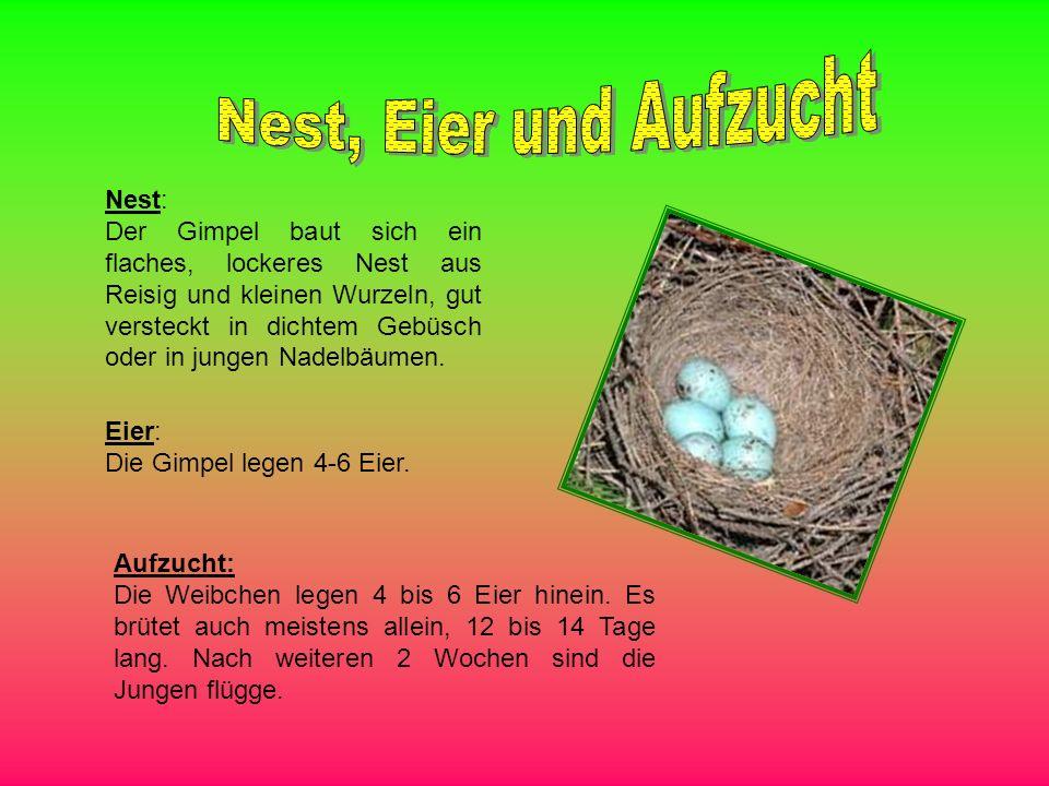 Nest, Eier und Aufzucht Nest: