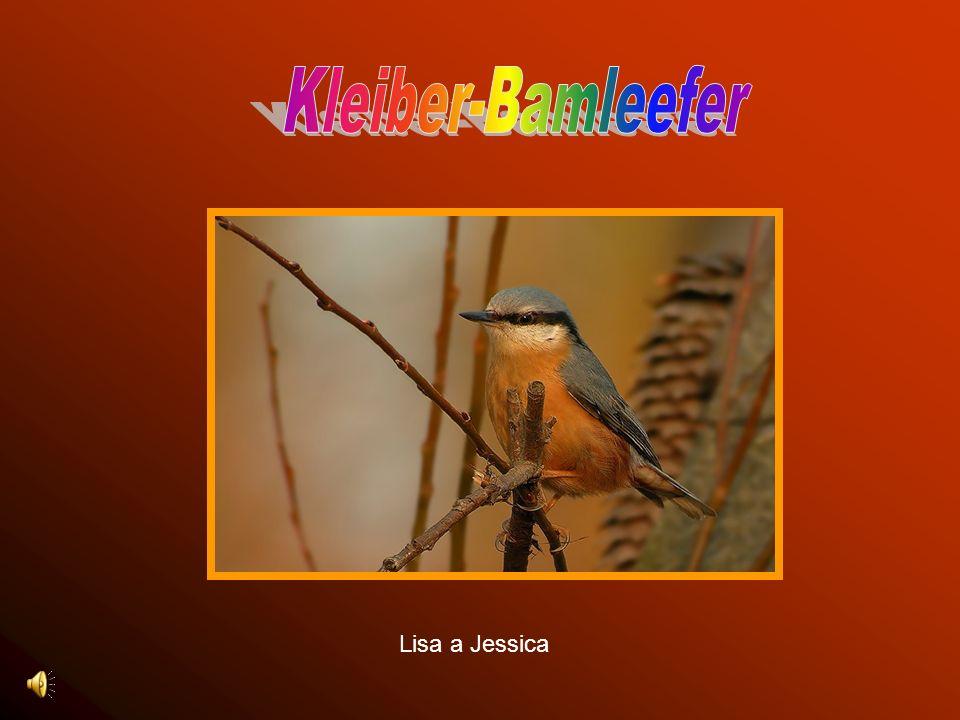 Kleiber-Bamleefer Lisa a Jessica