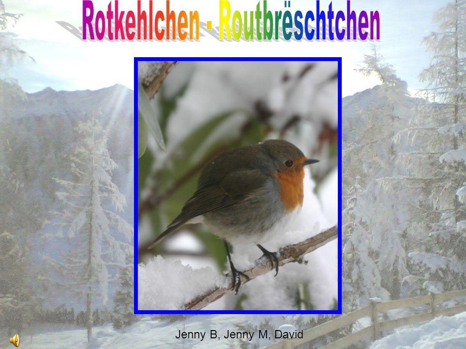 Rotkehlchen - Routbrëschtchen