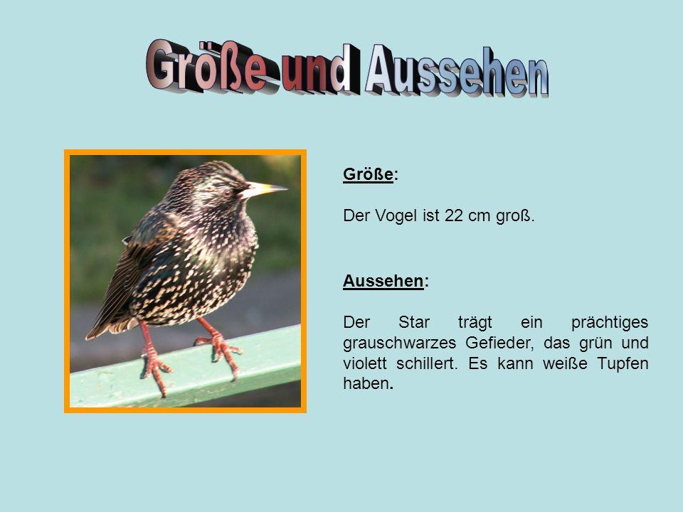 Größe und Aussehen Größe: Der Vogel ist 22 cm groß. Aussehen:
