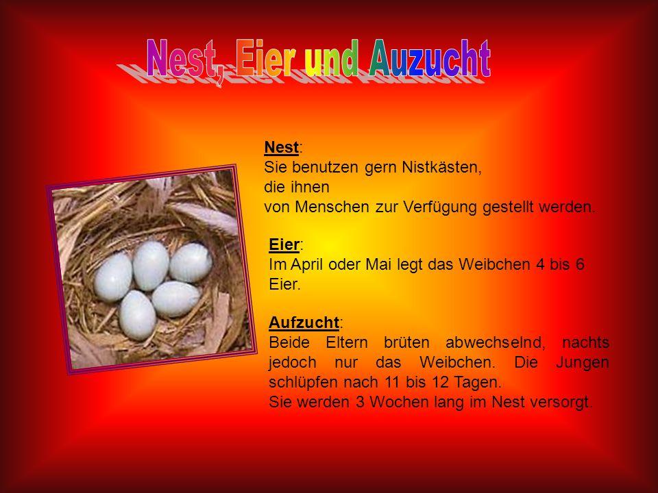 Nest, Eier und Auzucht Nest: Sie benutzen gern Nistkästen, die ihnen