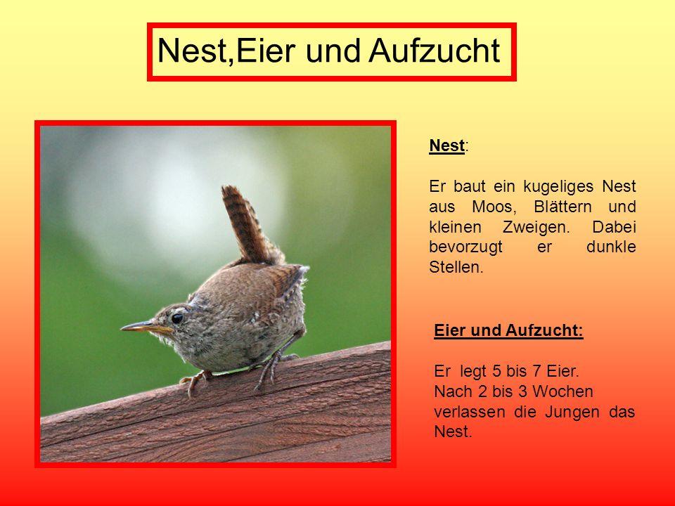 Nest,Eier und Aufzucht Nest: