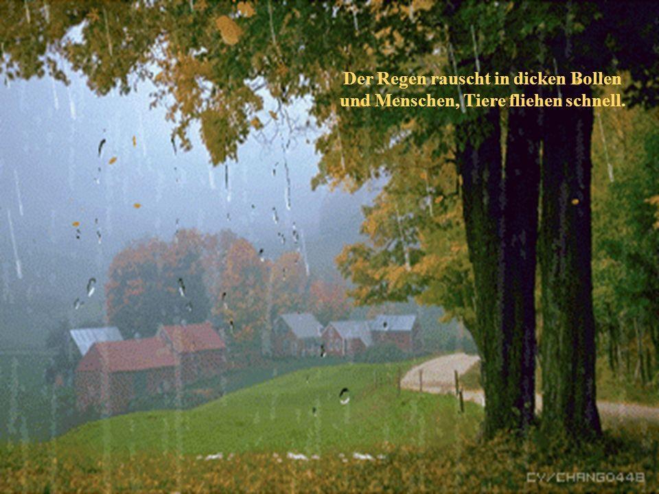 Der Regen rauscht in dicken Bollen
