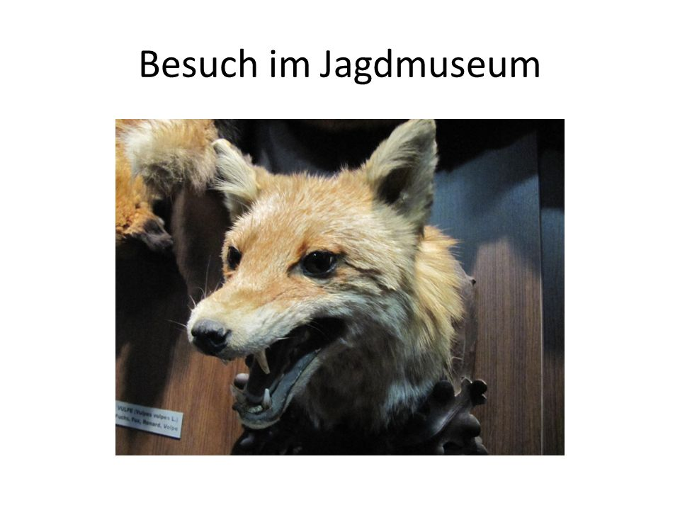 Besuch im Jagdmuseum