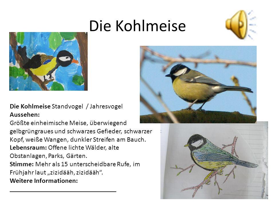 Die Kohlmeise Die Kohlmeise Standvogel / Jahresvogel Aussehen: