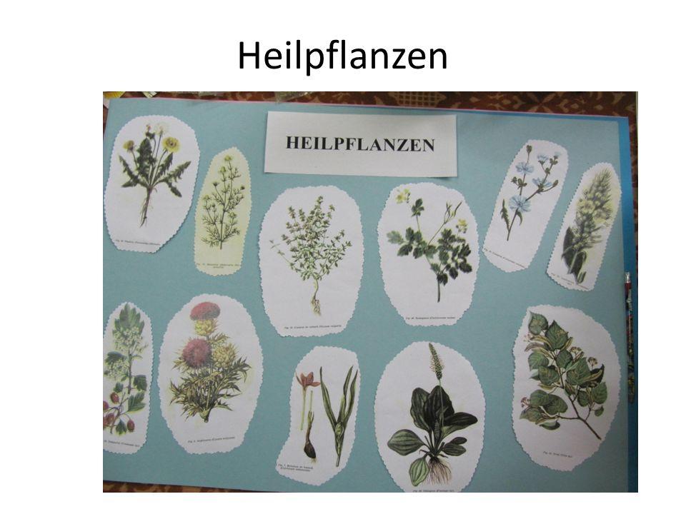 Heilpflanzen