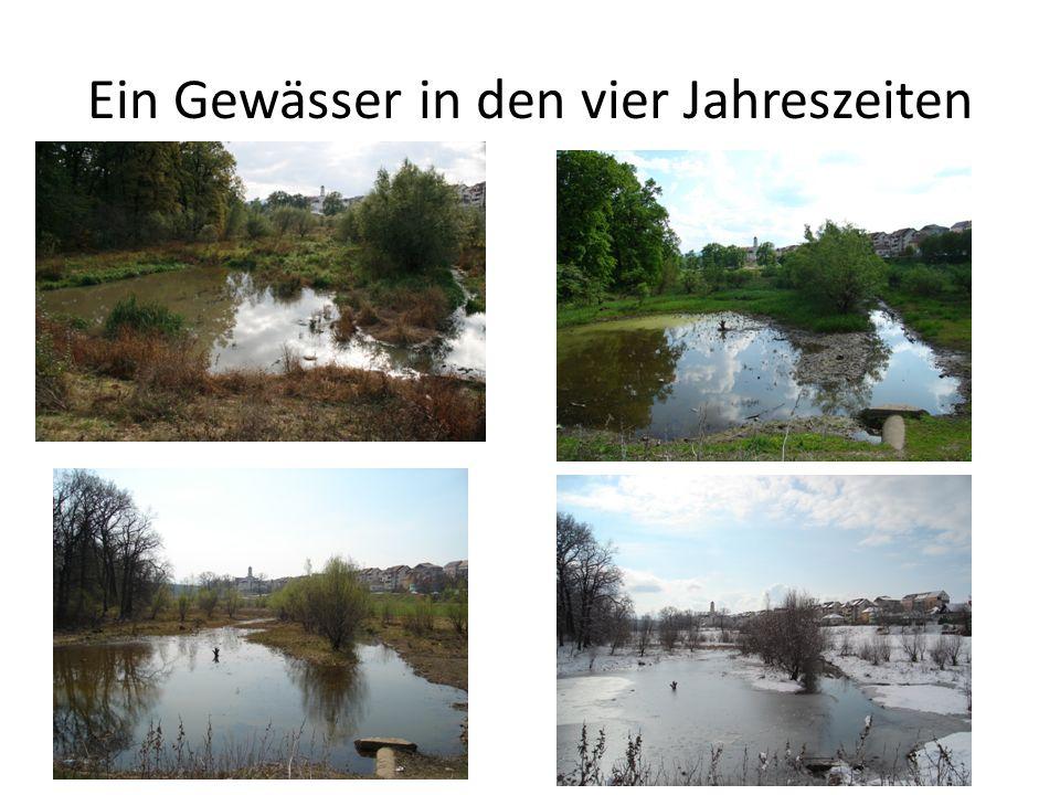 Ein Gewässer in den vier Jahreszeiten