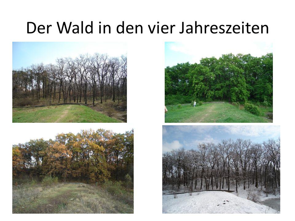 Der Wald in den vier Jahreszeiten