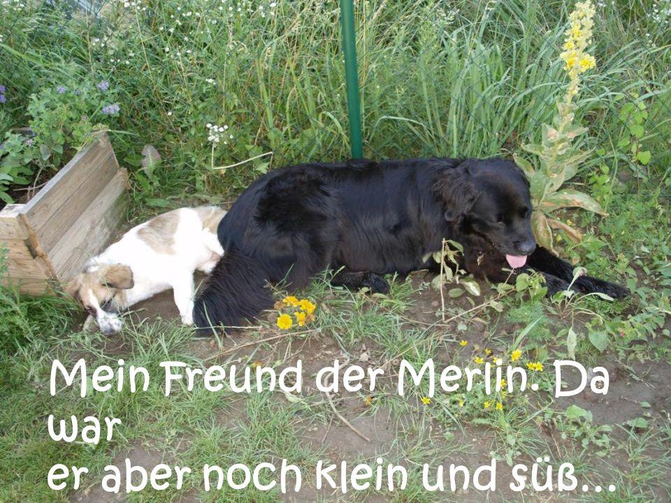 Mein Freund der Merlin. Da war