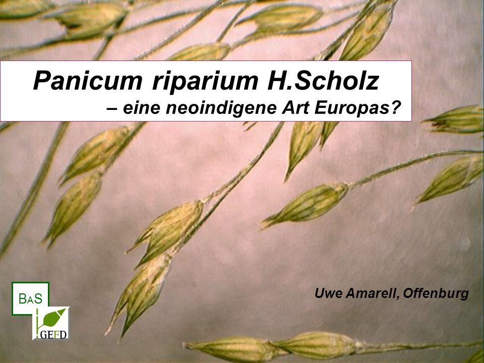Panicum riparium H.Scholz – eine neoindigene Art Europas