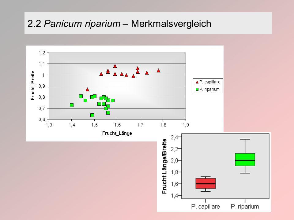 2.2 Panicum riparium – Merkmalsvergleich