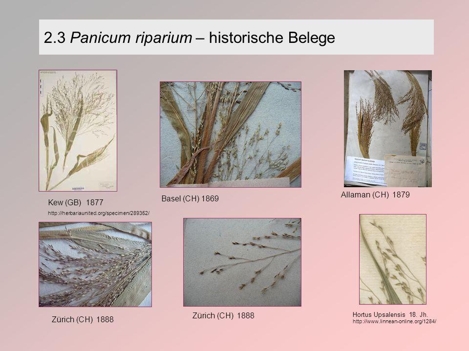 2.3 Panicum riparium – historische Belege