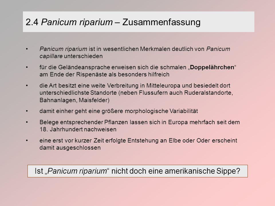 2.4 Panicum riparium – Zusammenfassung