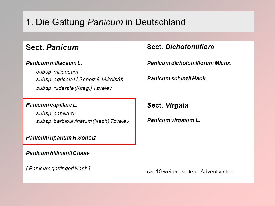 1. Die Gattung Panicum in Deutschland