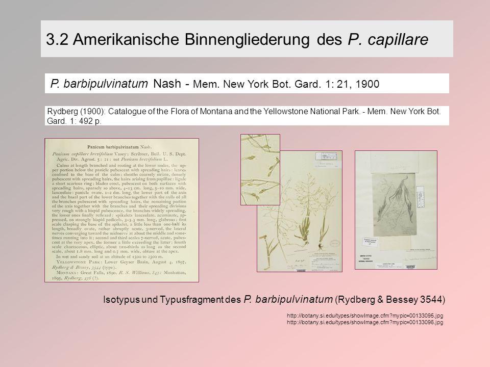 3.2 Amerikanische Binnengliederung des P. capillare