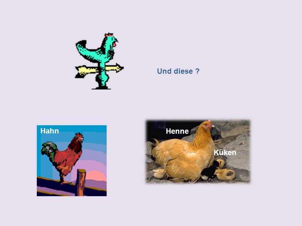 Und diese Hahn Henne Küken