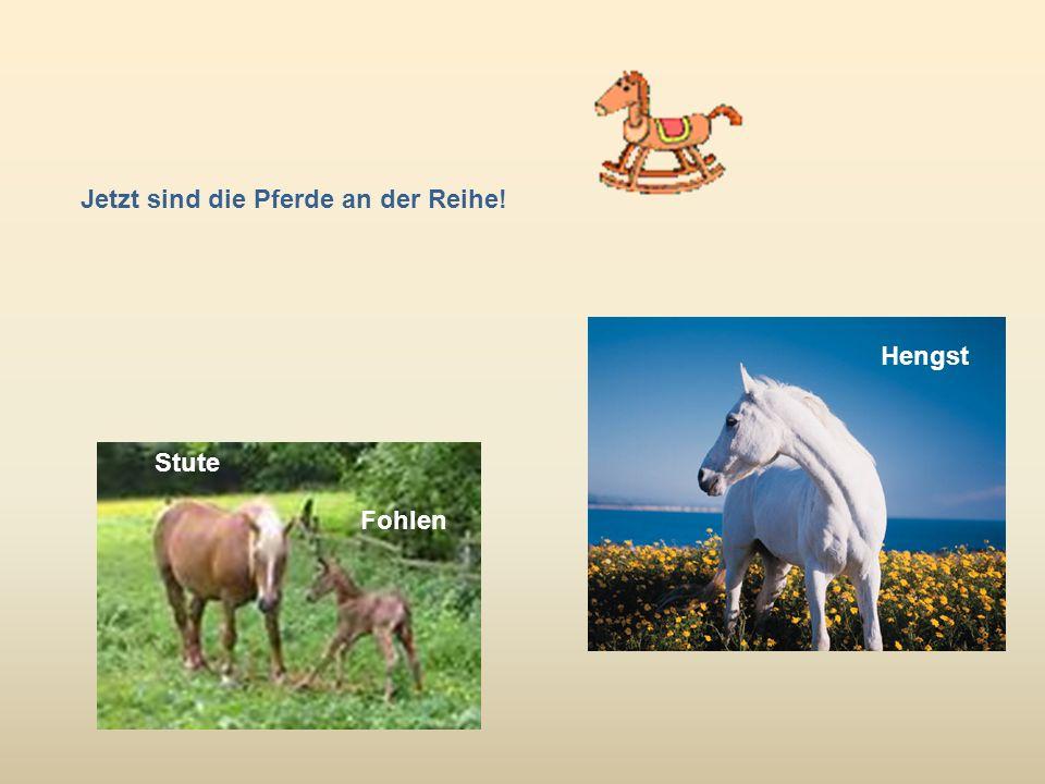 Jetzt sind die Pferde an der Reihe!