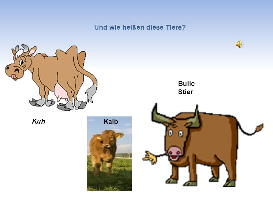 Und wie heißen diese Tiere