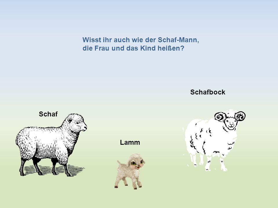 Wisst ihr auch wie der Schaf-Mann,