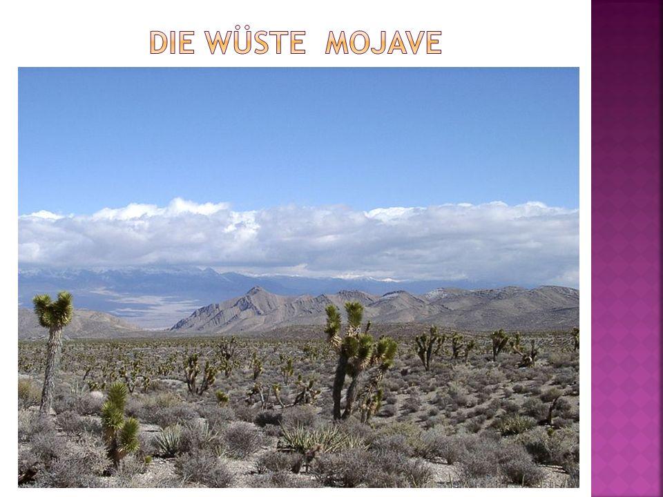 Die Wüste Mojave
