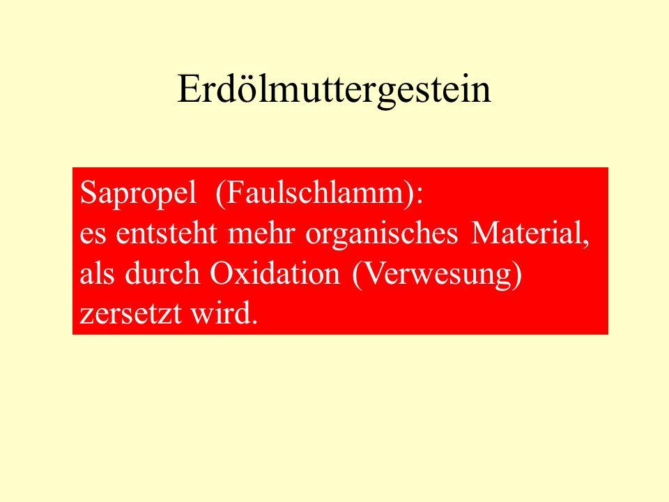 Erdölmuttergestein Sapropel (Faulschlamm):