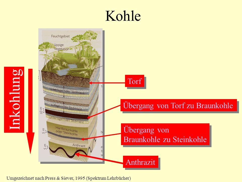 Kohle Inkohlung Torf Übergang von Torf zu Braunkohle Übergang von