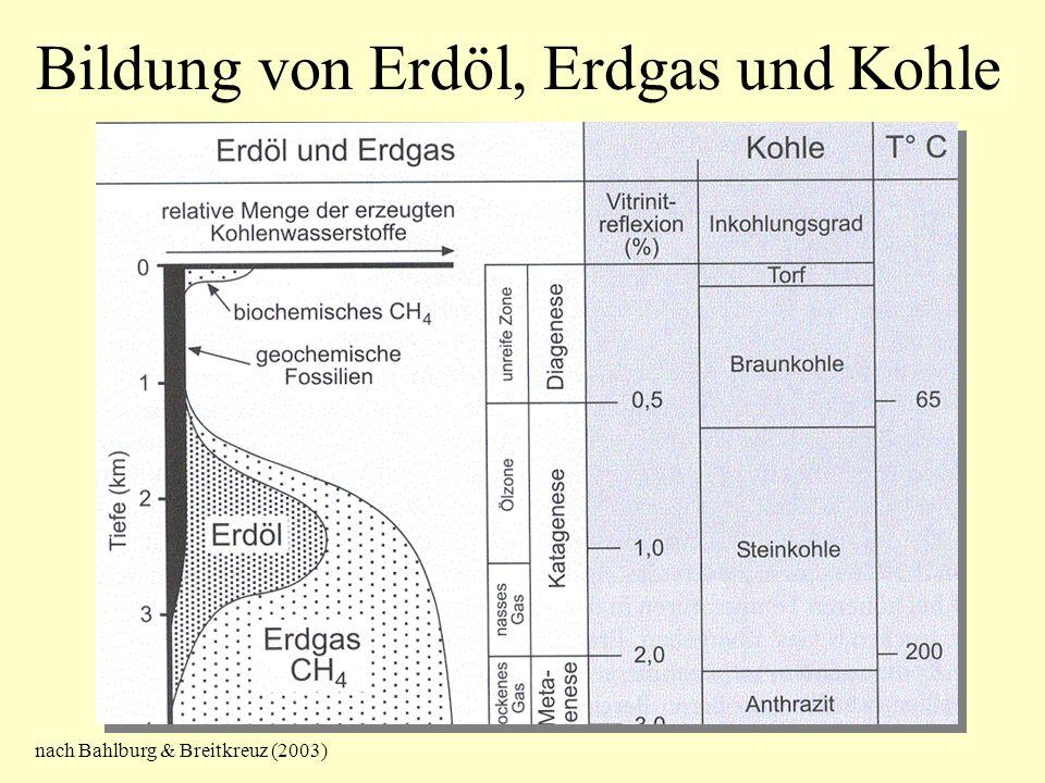 Bildung von Erdöl, Erdgas und Kohle