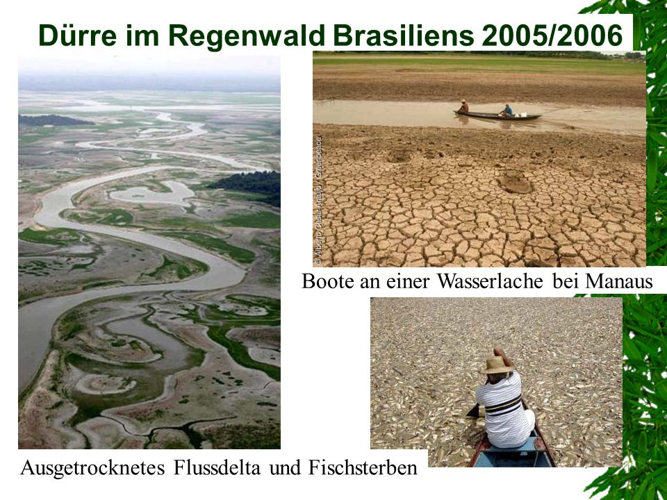 Dürre im Regenwald Brasiliens 2005/2006