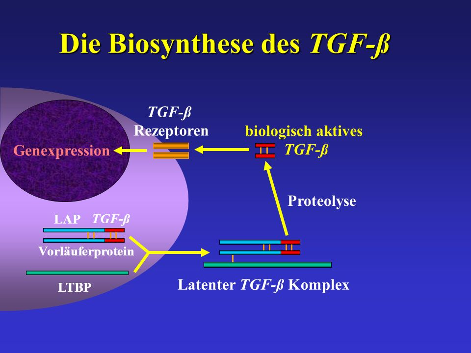 Die Biosynthese des TGF-ß