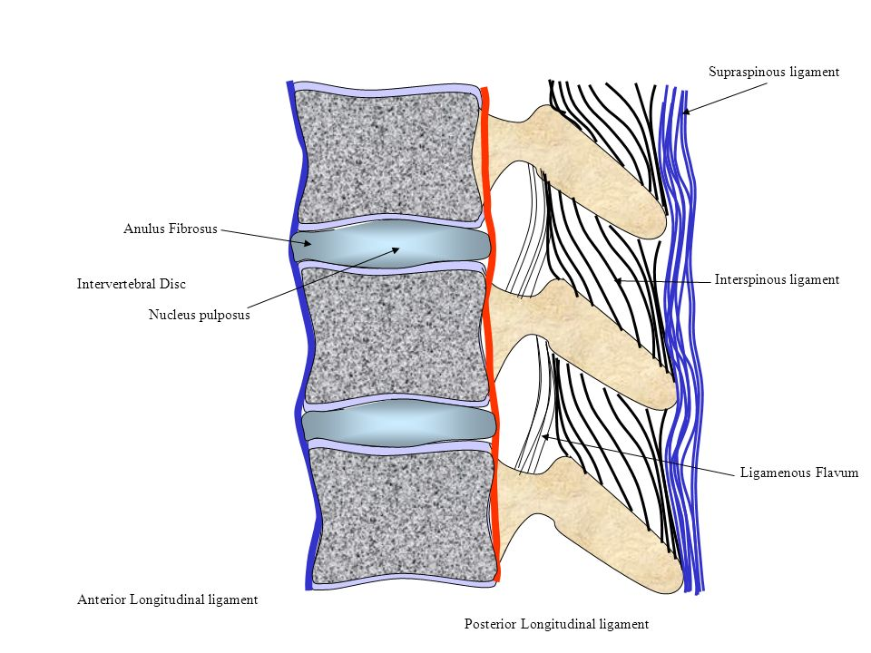 Supraspinous ligament