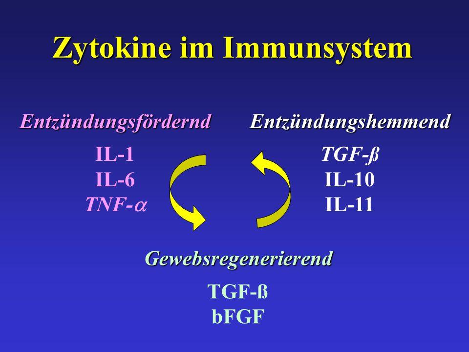 Zytokine im Immunsystem
