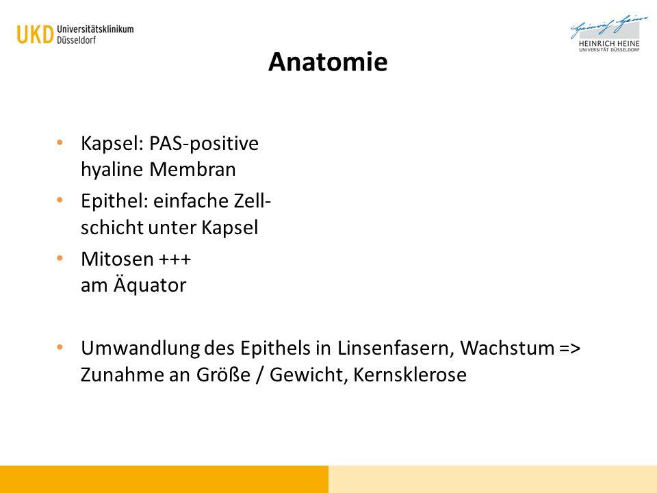Anatomie Kapsel: PAS-positive hyaline Membran