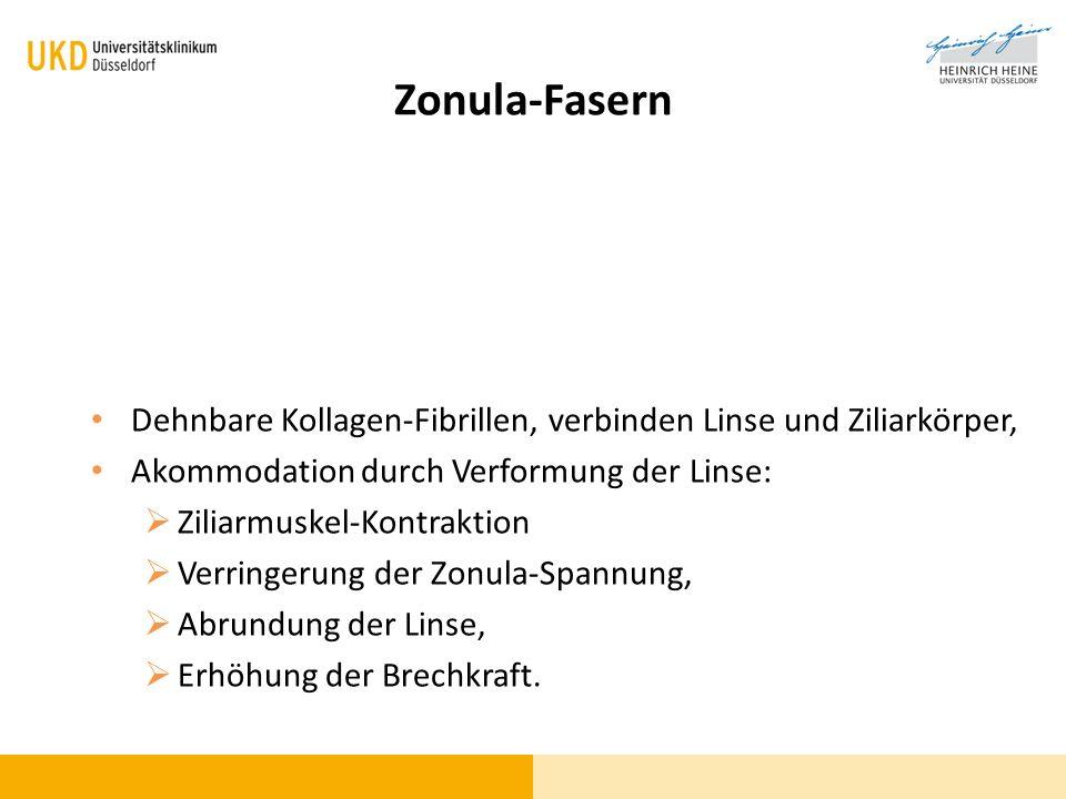 Zonula-Fasern Dehnbare Kollagen-Fibrillen, verbinden Linse und Ziliarkörper, Akommodation durch Verformung der Linse: