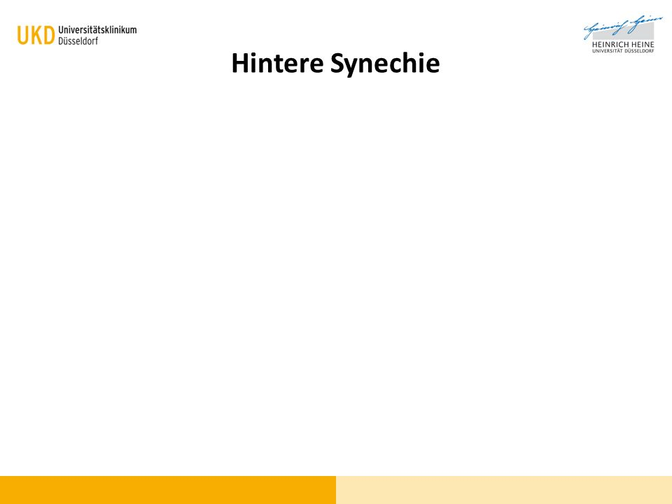 Hintere Synechie