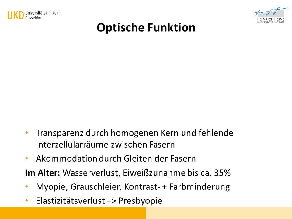 Optische Funktion Transparenz durch homogenen Kern und fehlende Interzellularräume zwischen Fasern.